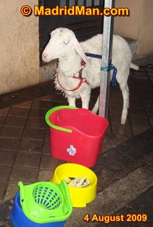 madrid-neighborhood-lamb.jpg