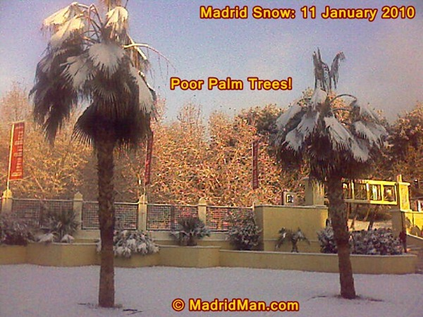 madrid-snow-palms-11-january-2010.jpg